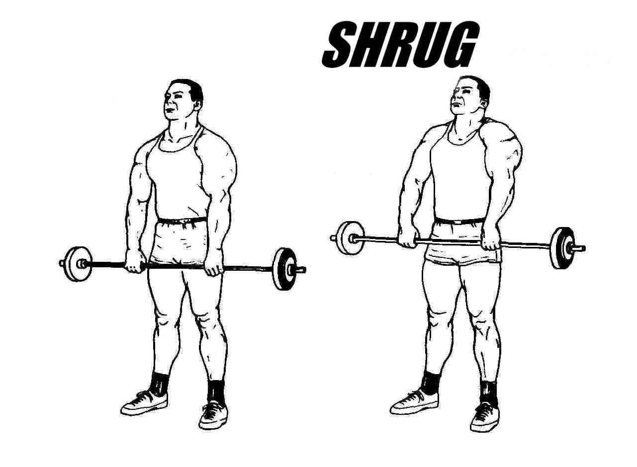 Shrug Barbell Shrugs Tzius Exercise